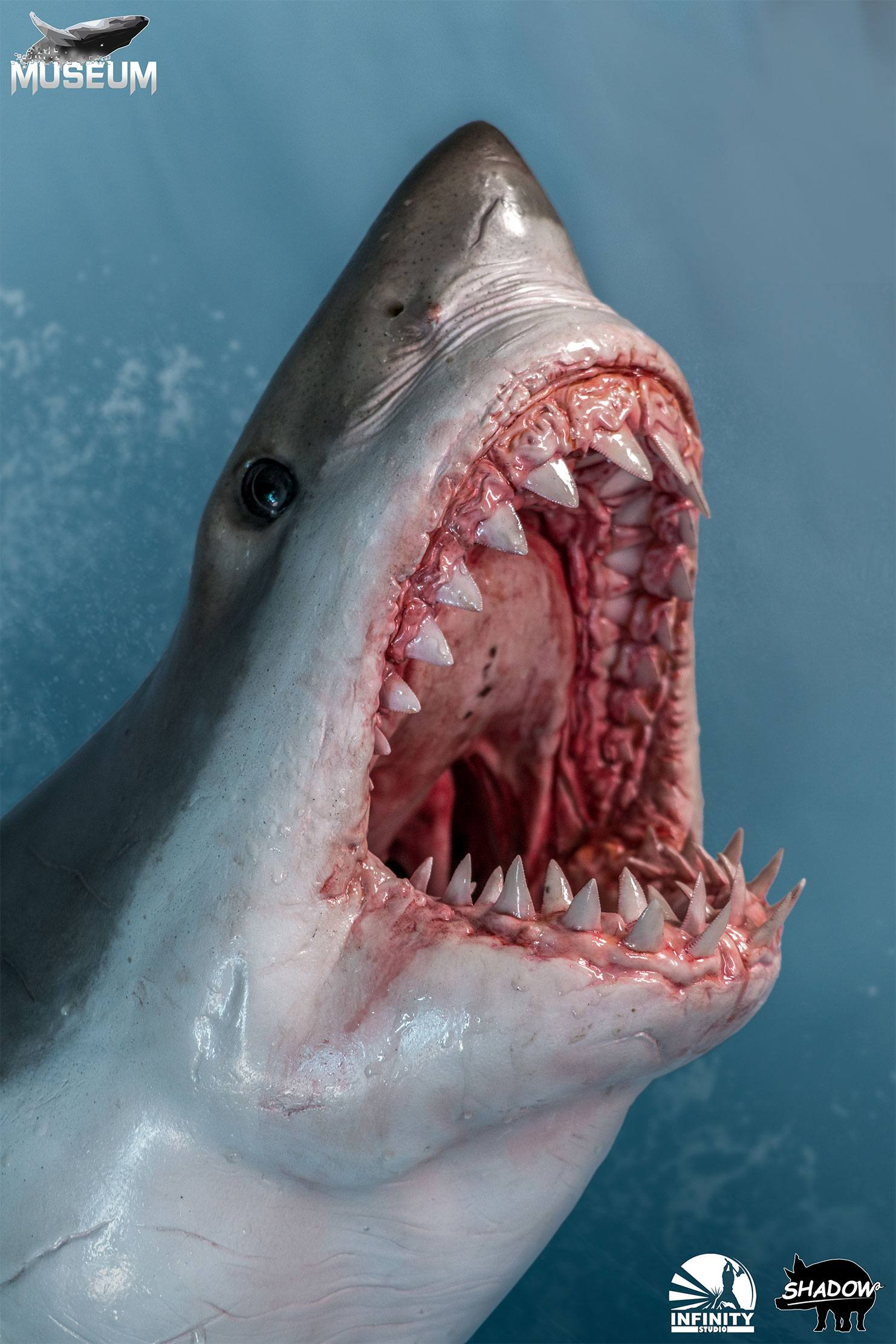Museum Series Statue 1/4 Great White Shark (Carcharodon carcharias) 65 cm - Animegami Store